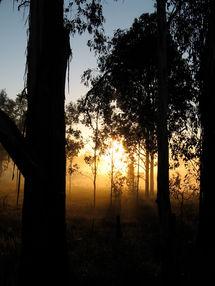Sunrise through gums COunsellor Sydney