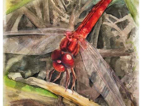 Red Dragonfly Rejuvenation
