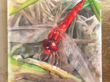 Red Dragonfly Rejuvenation
