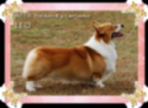 レオくん       (野神様ご愛犬)(2003.3.6~2018.2.23) ベア、小雪、OHANA、こしろー、ランス、小春のパパ