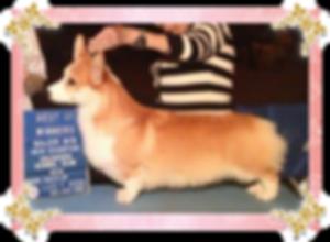 グリーンくん (村瀬様ご愛犬・当時)(2012.4.1~) キアラ、 ルーチェ、彩葉、アネラのパパ