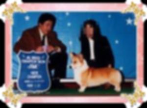 カントくん   (穂満様ご愛犬)  (1996.5.29~   ) アンナ、めい、セナ、はる、アンディ、そらのパパ