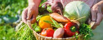 自家栽培健康野菜