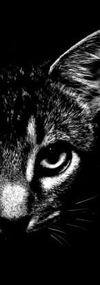Bad-Fox-081.jpg