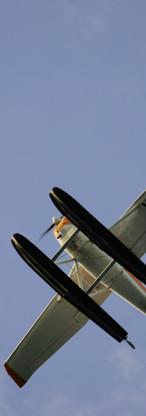 Bad-Fox-105.jpg