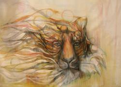 LC tiger - Copy