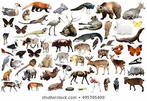 animales.webp