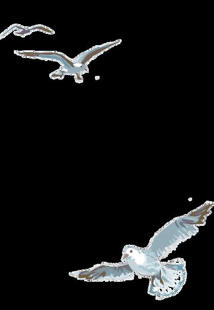 vogels-1.png