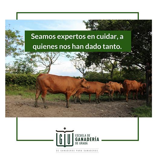 SEAMOS EXPERTOS.png
