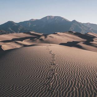 Sahara-bound