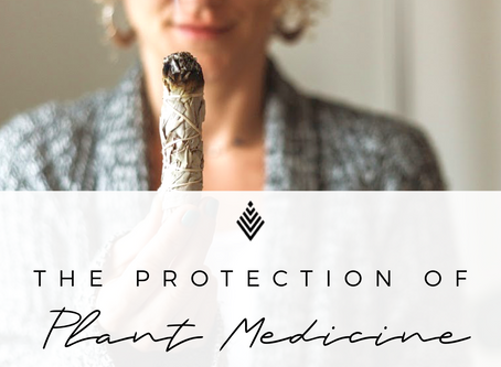 Palo Santo and the Protection of Plant Medicine