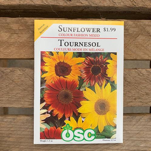 Sunflower - Colour Fashion Mixed