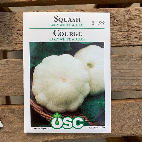 Squash - Early White Scallop