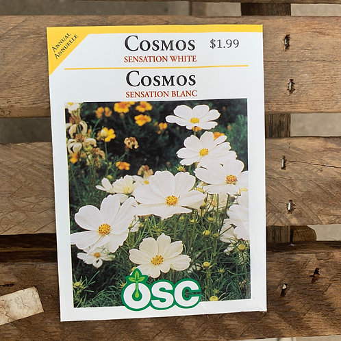 Cosmos - Sensation White