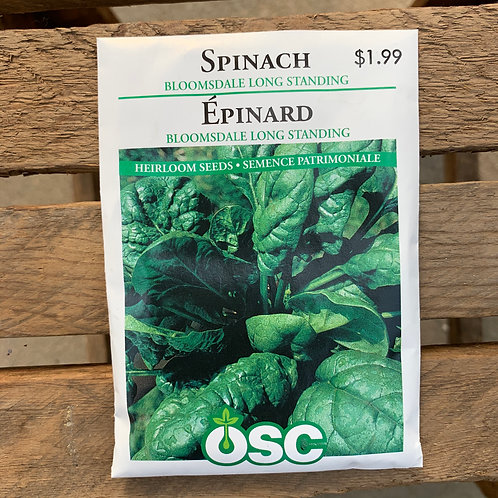 Spinach - Bloomsdale Long Standing