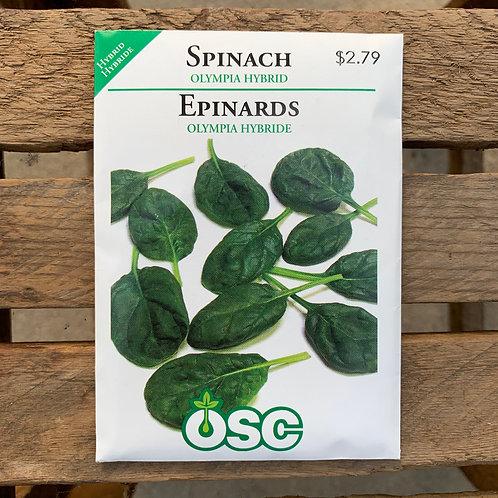 Spinach - Olympia Hybrid