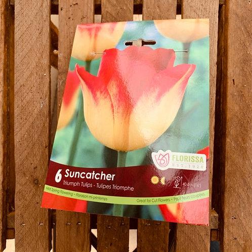 Triumph Tulips - Suncatcher