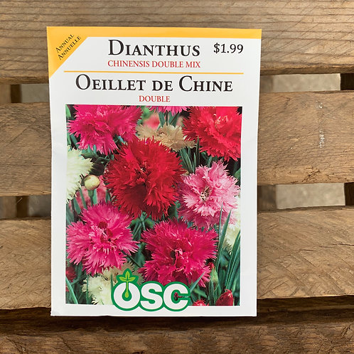 Dianthus - Chinesis Double Mix