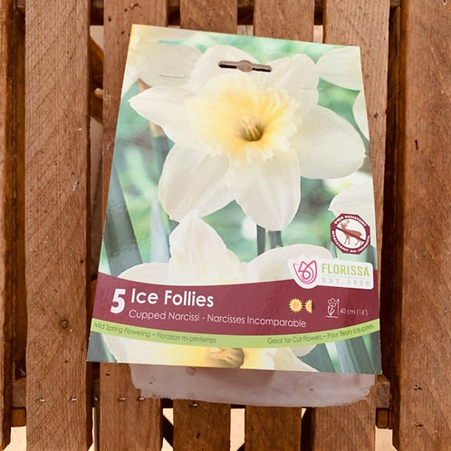 Cupped Narcissi - Ice Follies