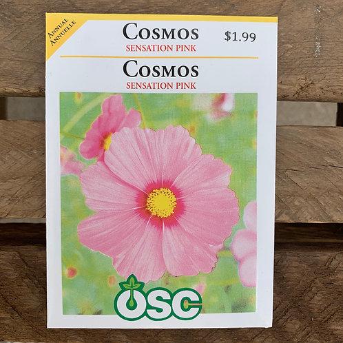 Cosmos - Sensation Pink