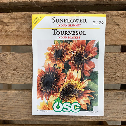 Sunflower - Indian Blanket