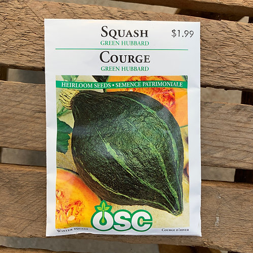 Squash - Green Hubbard