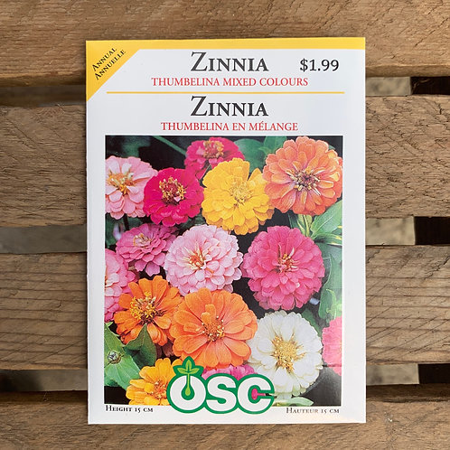 Zinnia - Thumbilina Mixed Colours