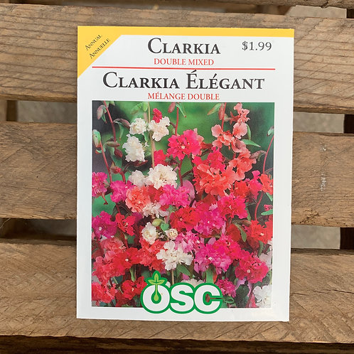 Clarkia - Double Mixed