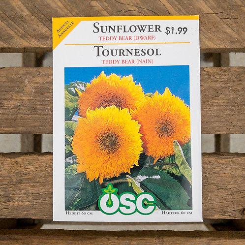Sunflower - Teddy Bear Dwarf