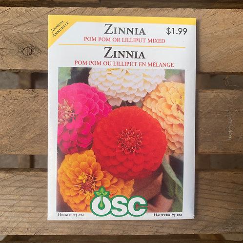 Zinnia - Pom Pom or Lilliput Mix