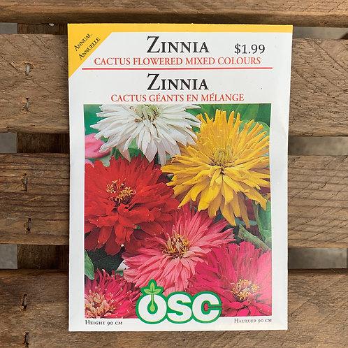 Zinnia - Cactus Coloured Mixed Colours