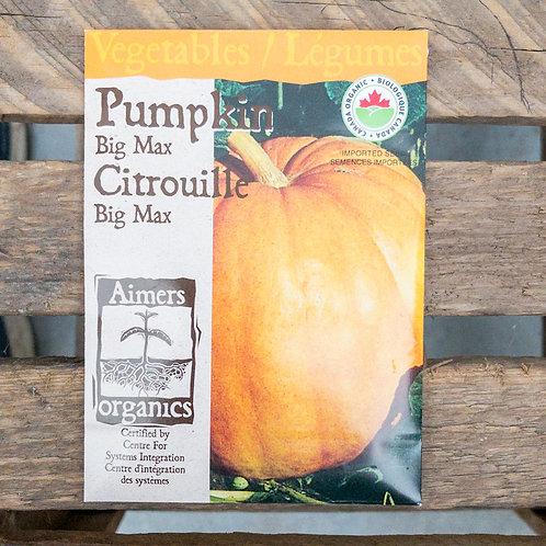 Pumpkin - Big Max - Organic