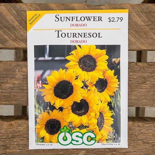 Sunflower - Dorado