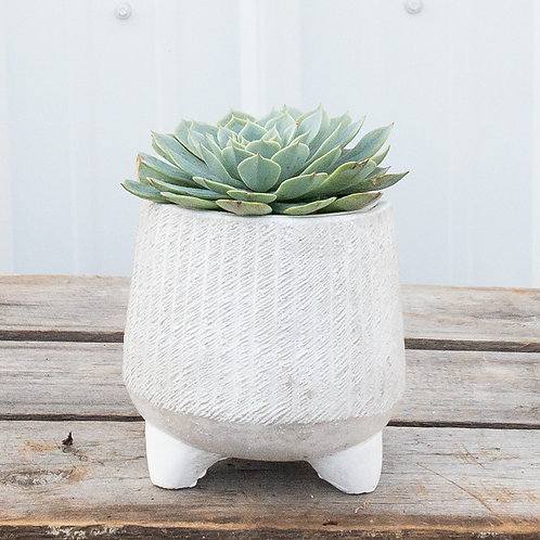Footed Succulent Planter
