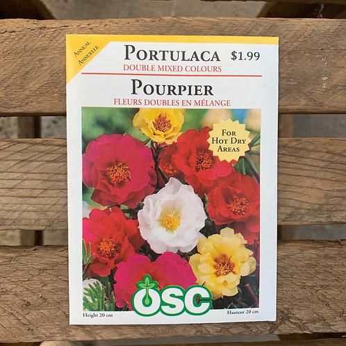 Portulaca - Double Mixed Colours