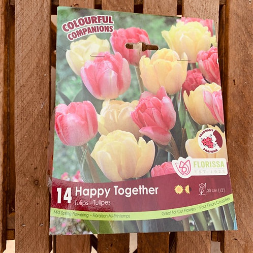Tulips - Happy Together Mix