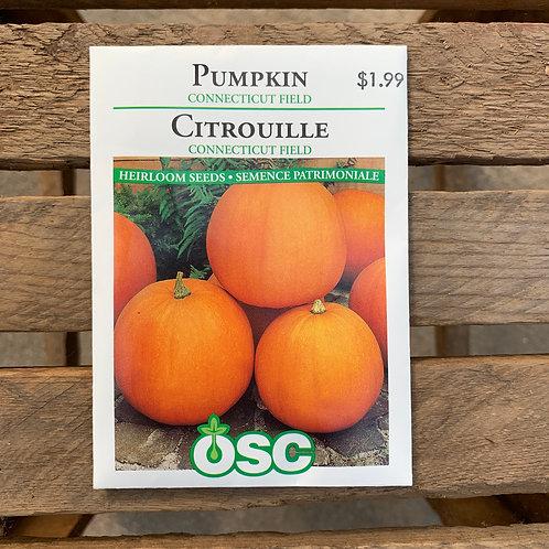 Pumpkin - Connecticut Field