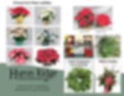 PoinsettiaFundraiser2019.jpg