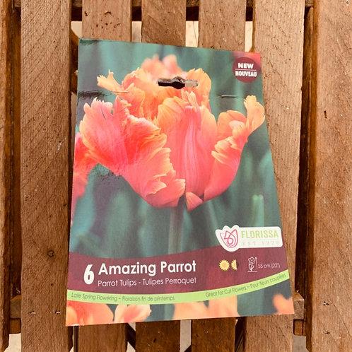 Parrot Tulips - Amazing Parrot