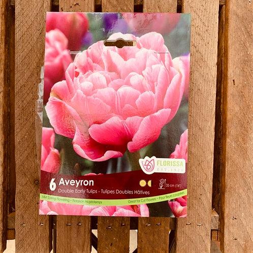 Double Early Tulips - Aveyron