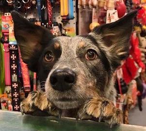 Yazoo Pet Supplies & Grooming