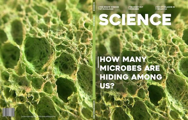 Sciencemag_sponge_web.jpg