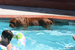 Versace swimming in the pool