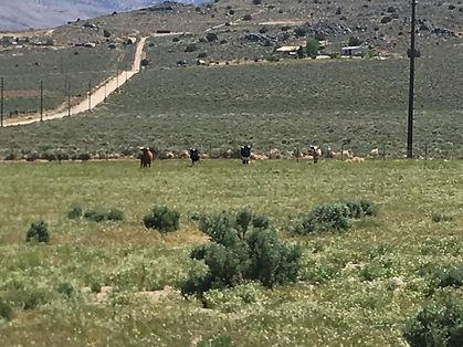 North Pasture Bar J Ranch.jpg