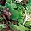 Thumbnail: Artisan Mix Salad  (click here)