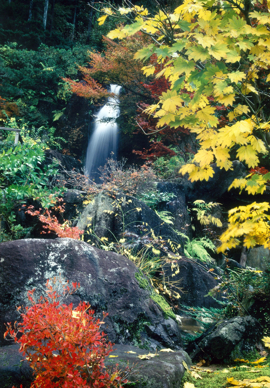 秋には極彩色に