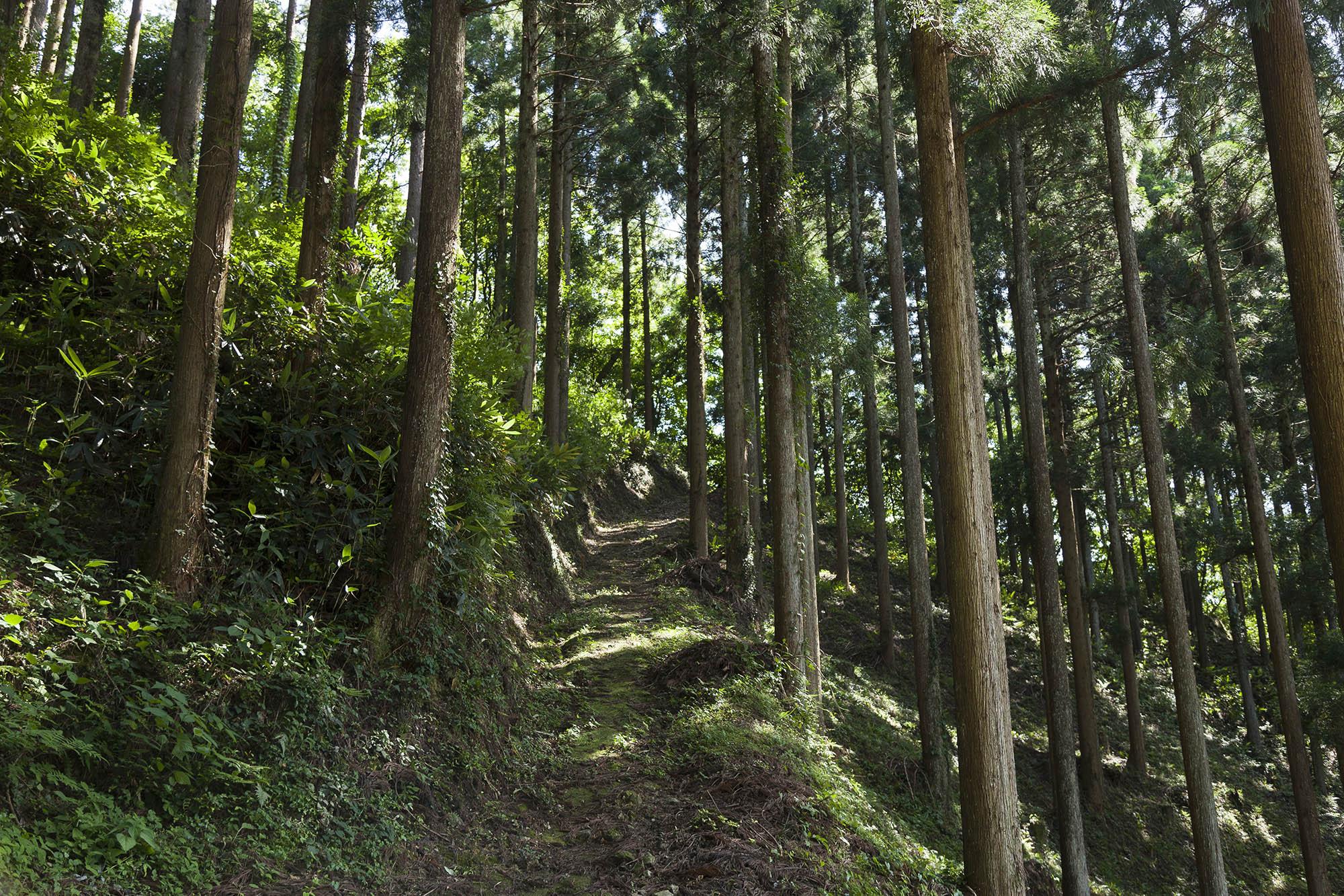 石王山をめぐる散策道
