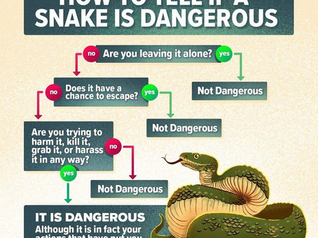 Snakes: Don't Fear the Unknown
