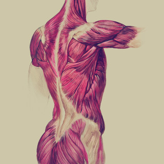 Muscles of the Back - Oil and acrylic on