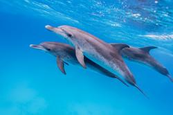 Isabelle_Dupré_-_Dolphin3